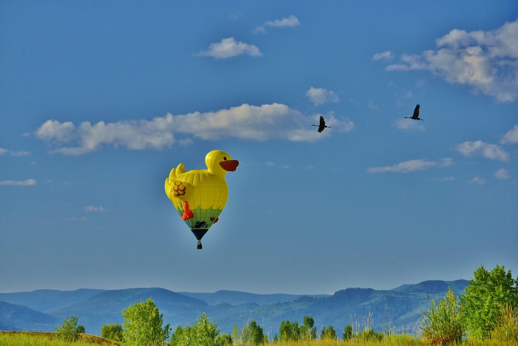 Sand Hill Cranes swing by the welcome Rubber Ducky to the friendly skies