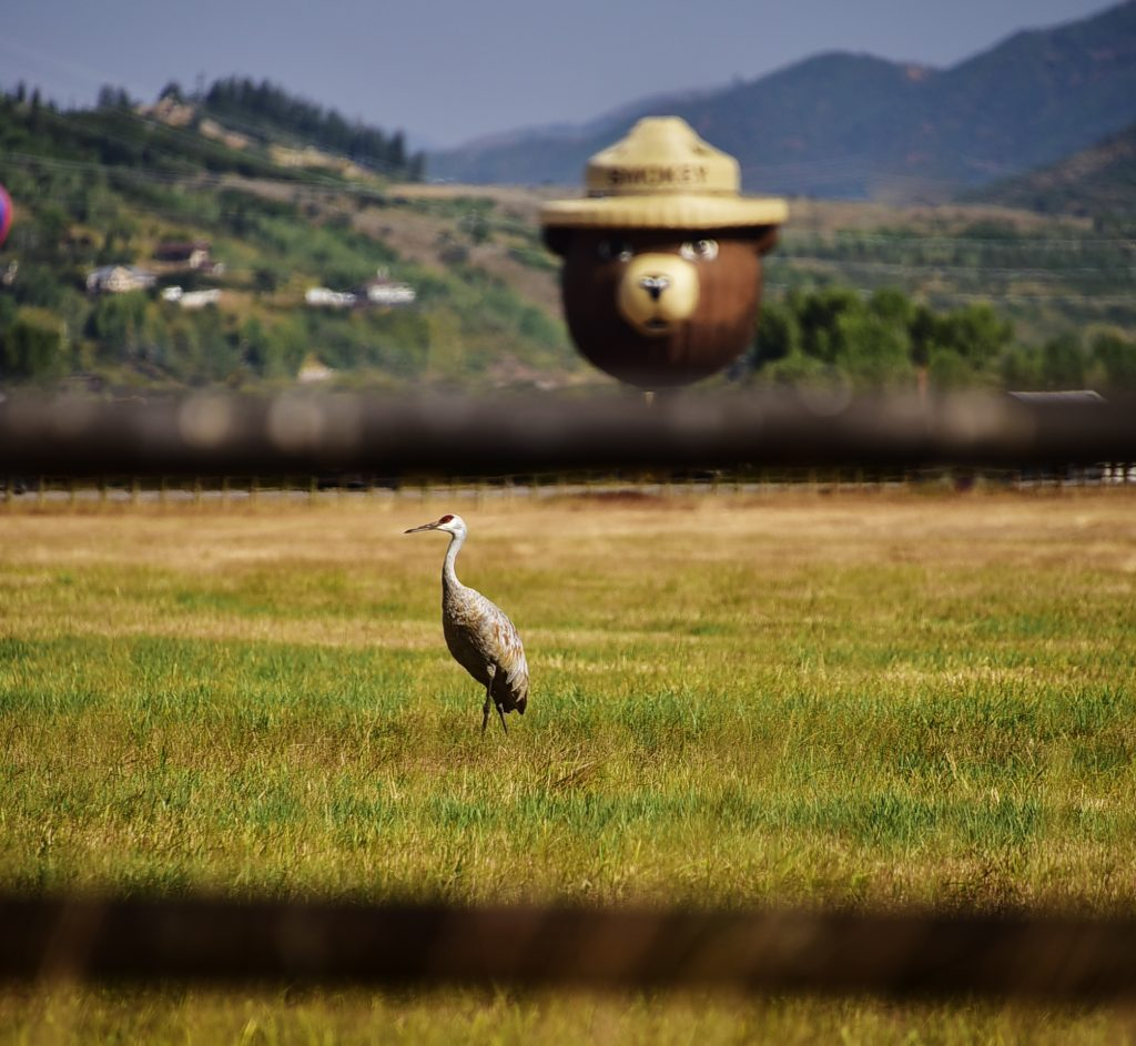 Smokey the Bear keeping an eye out for the Sand Hill Crane