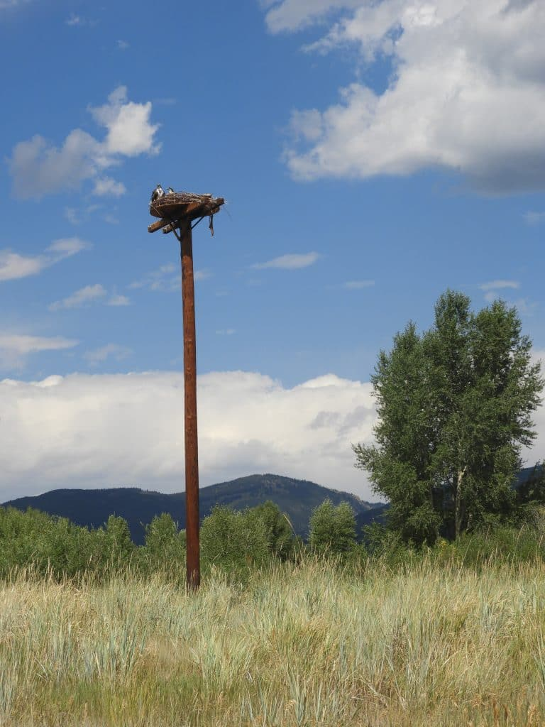 Sunday in Routt County