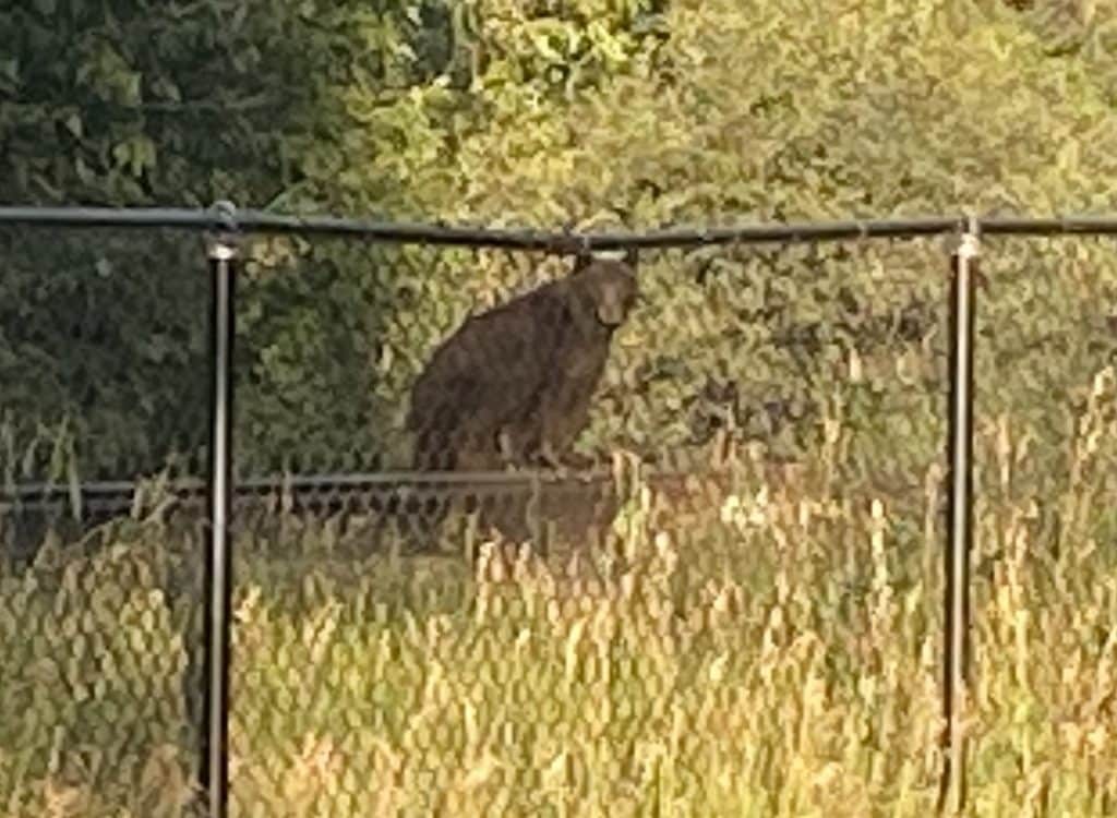 About 725p on 16 Aug, on the railroad tracks across and south from the rodeo grounds