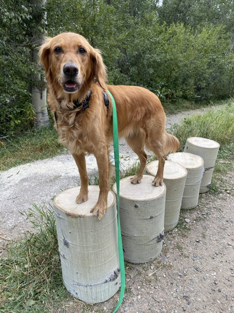 Louie on tree stumps after Spring Creek clean up.