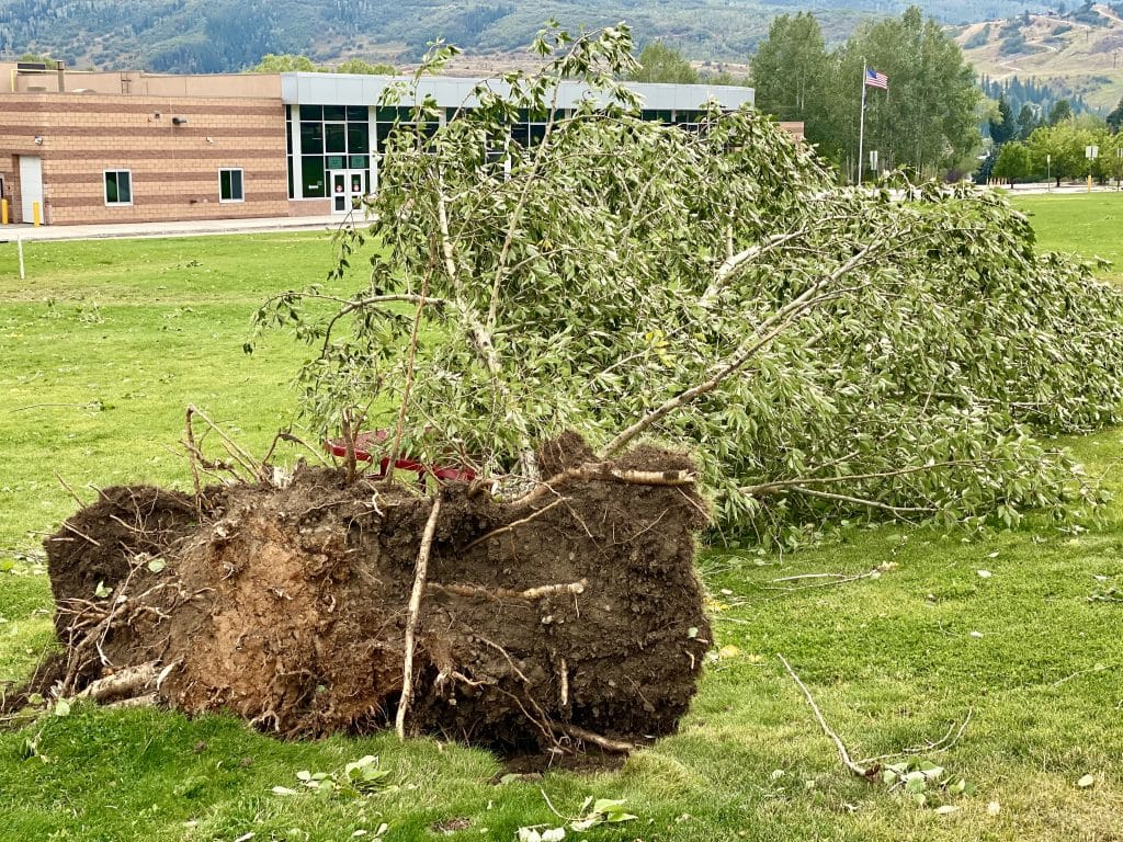 High School Tree Down from Wind/Snow Storm.