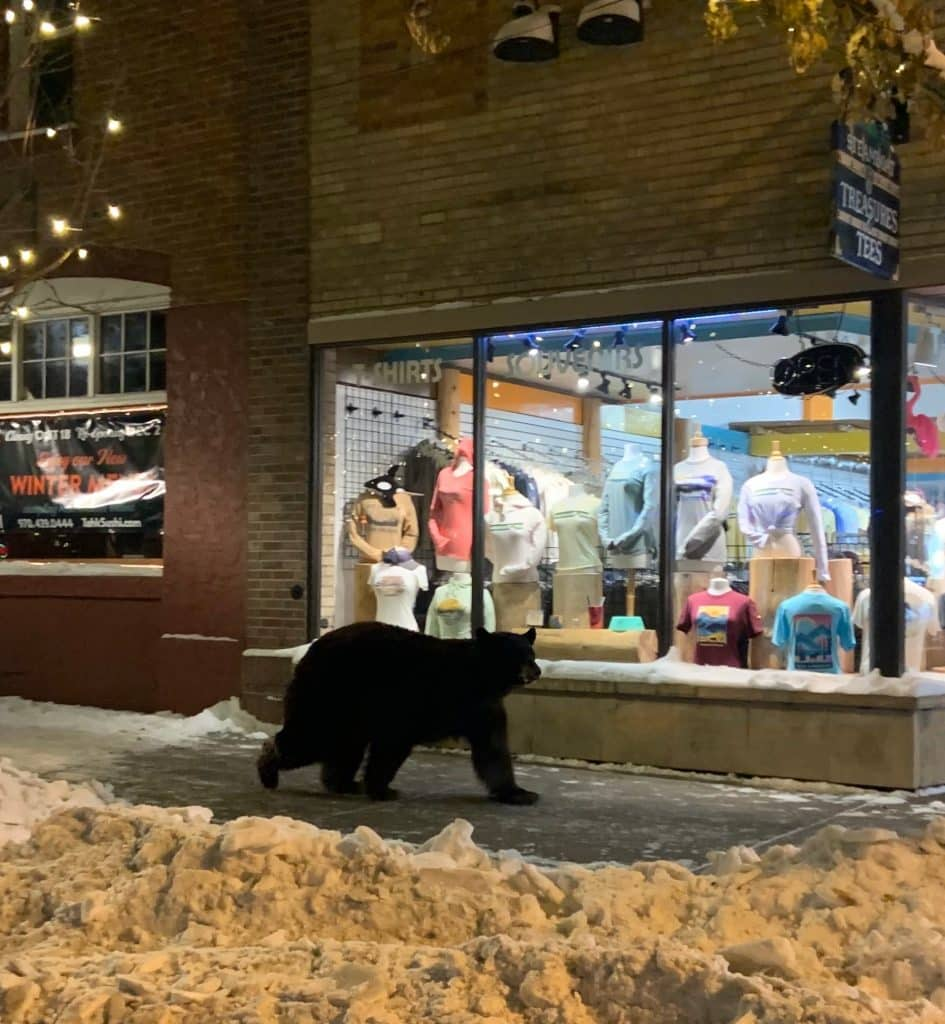Bear on Lincoln doing some window shopping. Photo credit by Hobson Crow.