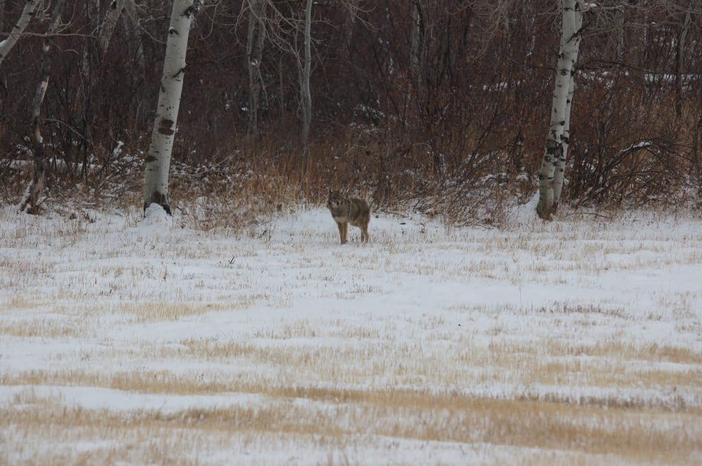Snowy day visitor in Routt County.