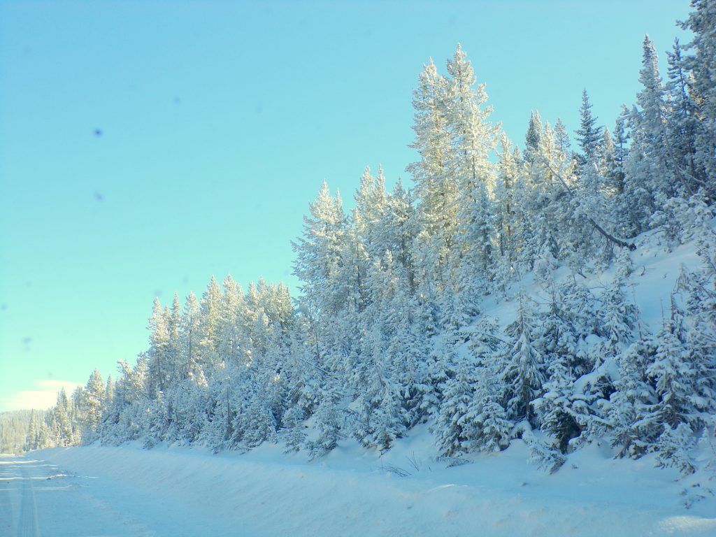 Rabbit Ears pass about 3 weeks ago