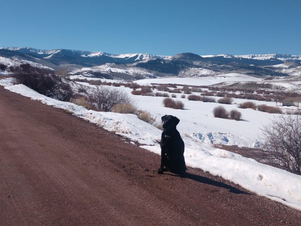 Bluebird Day in South Routt for Tikka.