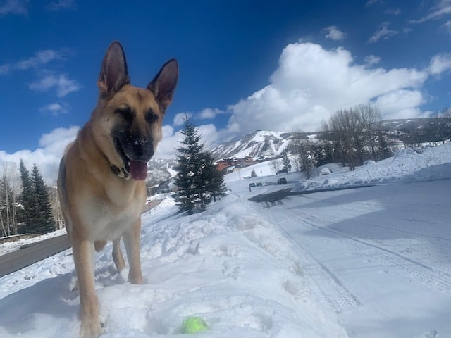 Our dog, Boulder, enjoying the recent snow on a snow bank with his ball.