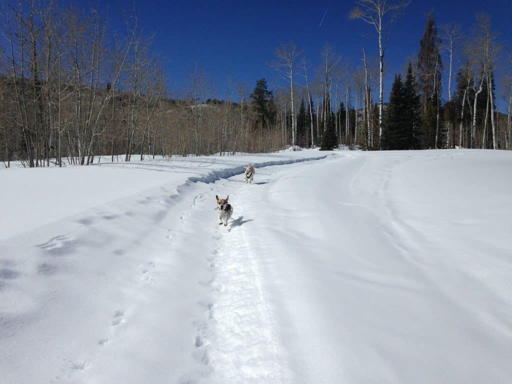 Chloe and Daisy lovin' the bluebird day in south Routt.