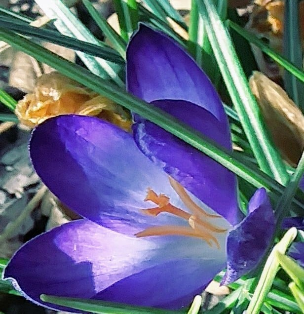 House on co rd 18 near Sarvis Cr trail/ yampa river from 5th str bridge/ crocuses are both at USPS.
