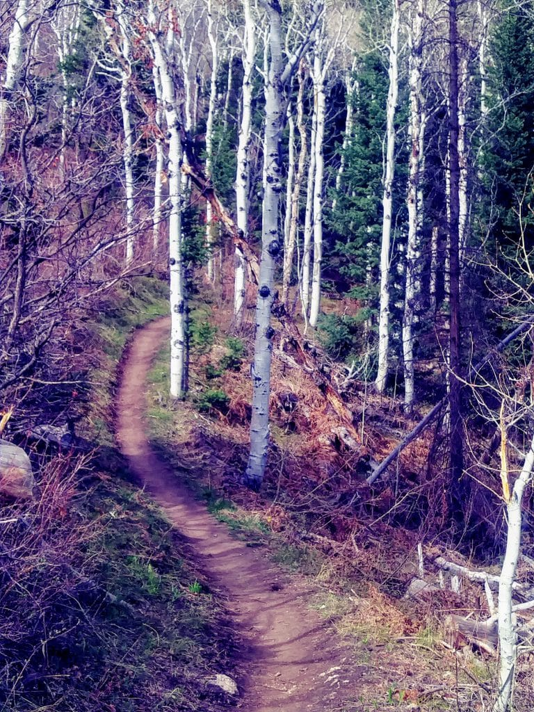 Creekside trail off Burgess Rd and yampa rafters/ boarders
