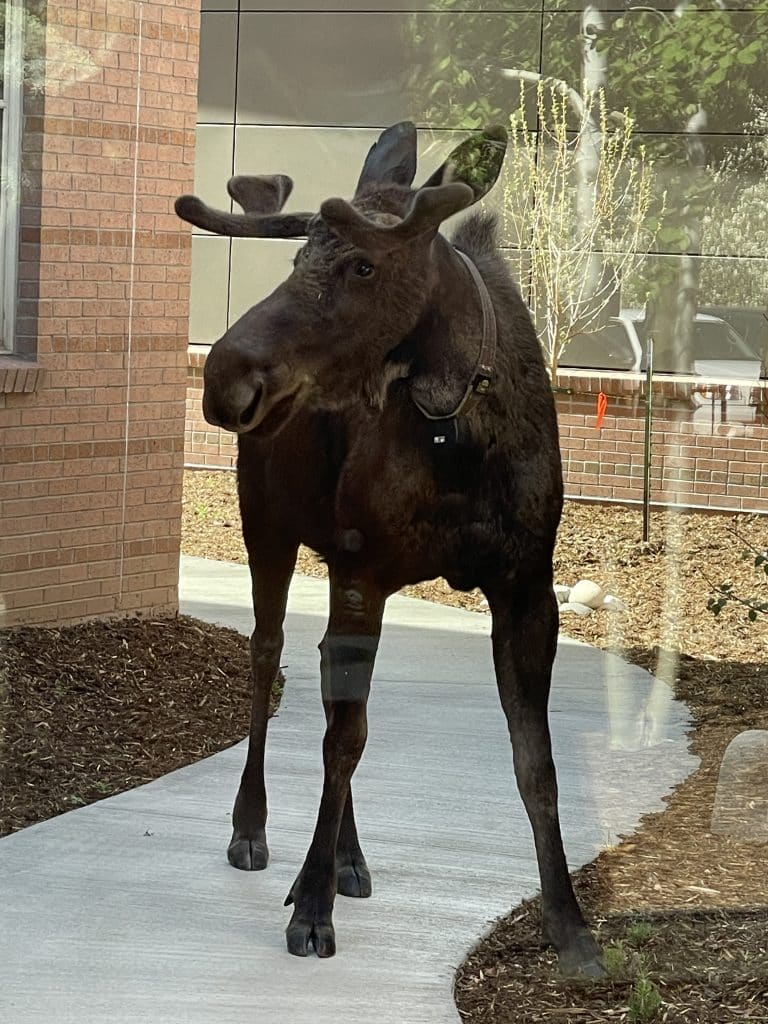 Moose checking out the new Emergency Dept renovations at UCHEALTH YVMC
