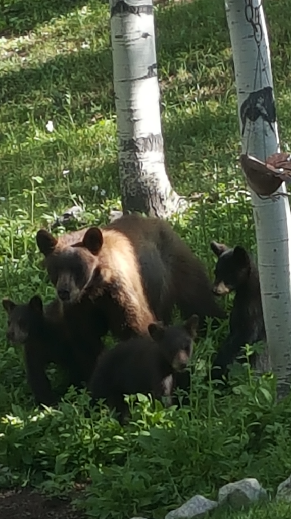 Right place right time to see Mama taking the cubs to the park.  They played on my picnic table using the umbrella to climb up and slide down.  No snacks, just play time. Stagecoach