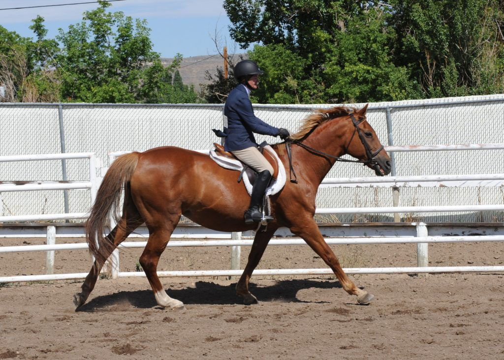 Here are two photos from the Snowmelt Horse Show held at the Hayden Fairgrounds on Saturday.  Thompson is Tina Thompson, riding Dolce, and they were the English Walk, Trot, Canter Champions.
