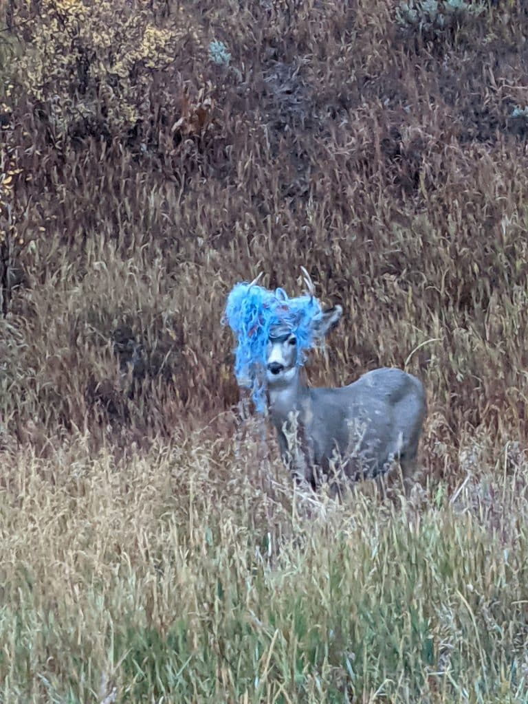 The latest deer fashion... But seriously people pick up your trash