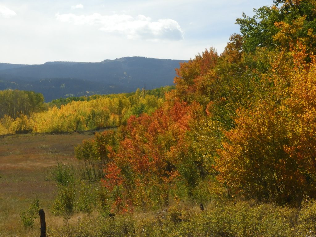 Fall colors Flat Tops Wilderness
