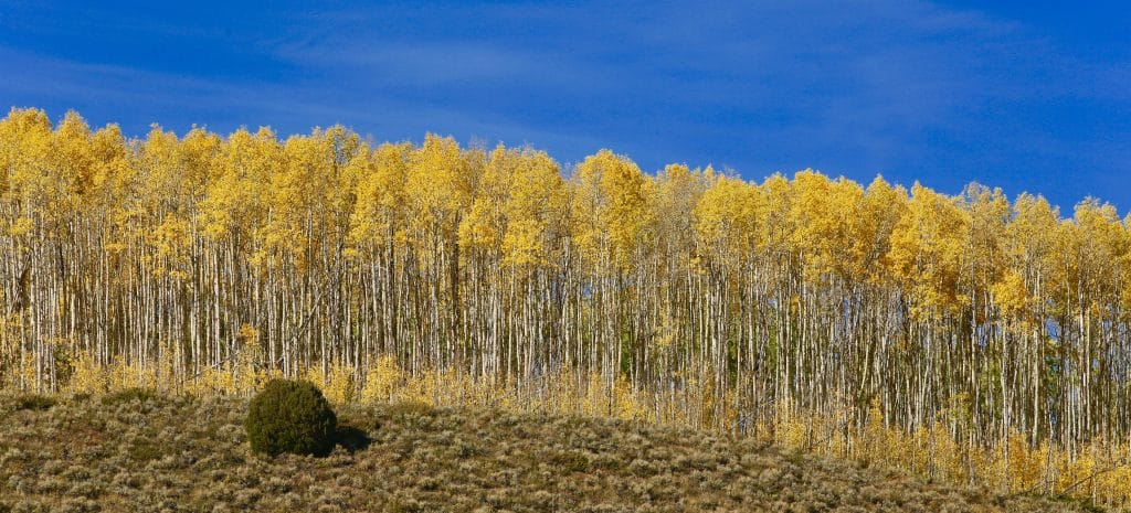 Autumn Colors in the Flat Tops Wilderness Area